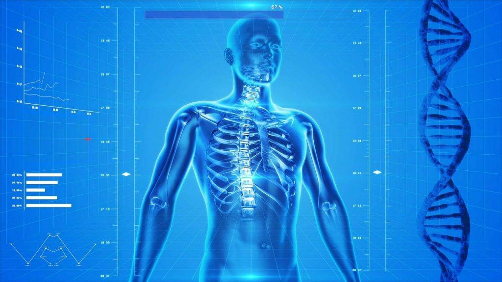 scheletro corpo umano