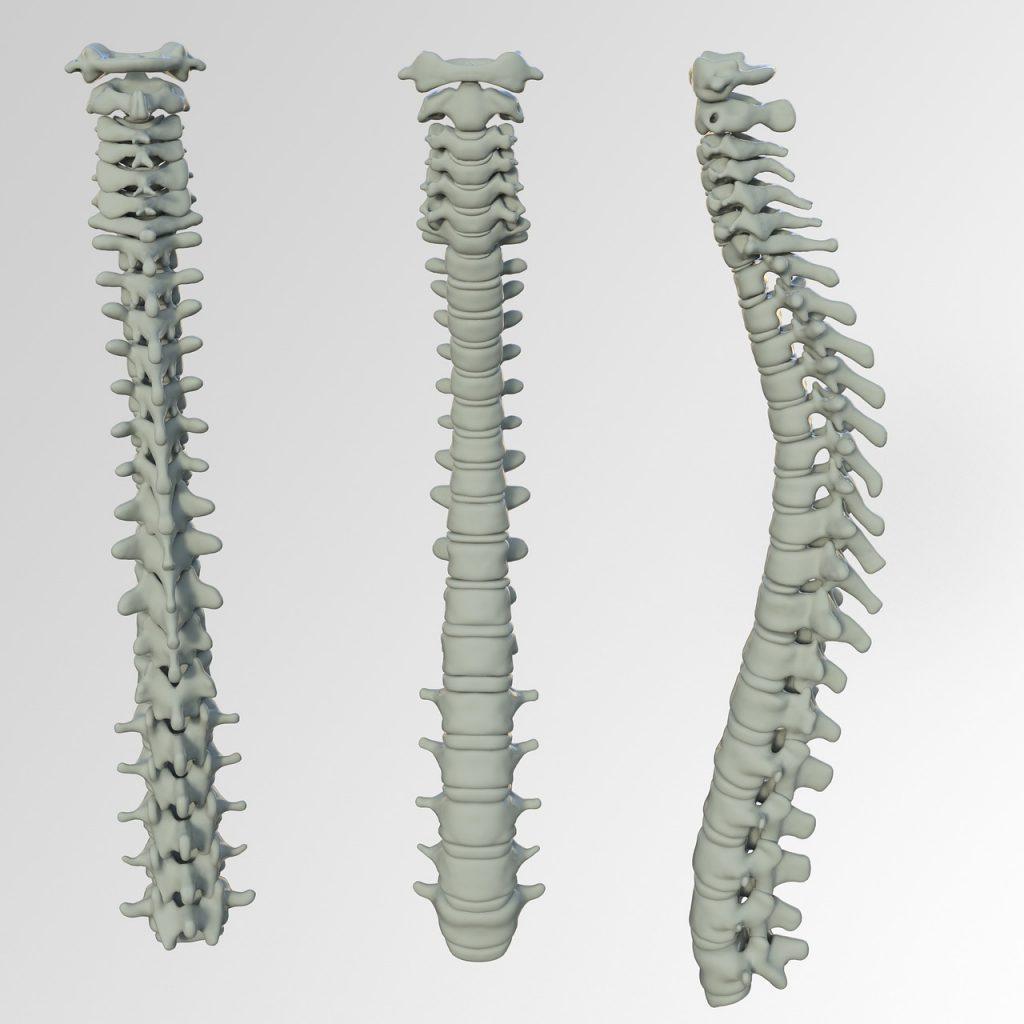 schiena e colonna